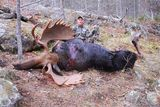Great Ontario Moose Hunting at Halleys Camps