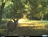 Nice Buck Waiting For You in 2012