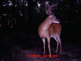 Any Questions? Ohio BucksTrue Whitetail Hunting.