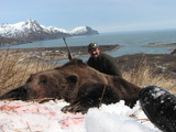 Alaska Brown Bear Hunting