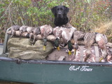 Waterfowl Hunting Dog, Maine Duck Hunting Outfitter.