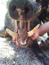 Boar Hunts California, Wild Hog Hunting in California Guided Professionally.