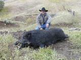 Boar Hunts in California Wild Boar Hunting professionally Guided.