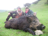 California Hog Hunting Boar Hunting Outfitters California.