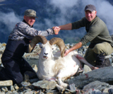 Alaskan Dall Sheep Hunting, Dall Sheep Hunts Experienced Hunting Guide.