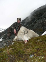 """Alaska Mountain Goat Hunting"" Alaska Goat Hunts, Big Game Hunting Alaska"