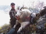 Mountain Goat Hunting Guide, Alaska Mountain Goat Hunts Experienced Hunting Guide and hunting Outfitter.