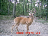 Deer Hunting Iowa, Trophy Iowa Deer Hunts.