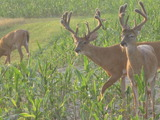 Trophy Whitetail Deer Hunting in Illinois