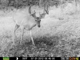 Ohio Whitetail Outfitter Trail Cam Photo