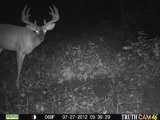 Trail Cam Photo Ohio Whitetail