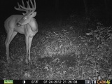 Ohio Big Whitetail Buck
