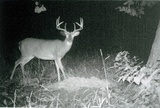 Ohio Big Whitetail