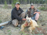 Blonde Bear Hunt Alberta Canada