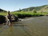 Flyfishing For Rainbow Trout