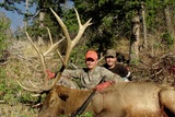Rifle Elk Hunt Wyoming