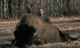 Bison Hunting Tennessee