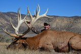 Trophy Elk Hunting in Colorado.