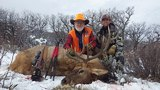 Quality Colorado Elk Hunting.