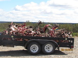 Quebec Caribou Outfitter