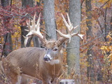 Whitetail Hunting,Pennsylvania Trophy Deer Ranch