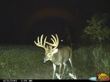 Another Illinois Giant