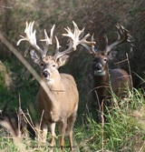 Non typical Bucks on the ranch