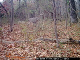 Southern Illinois Outfitters, Monster rutting buck