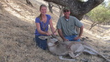 California Black Tail Deer Hunting.