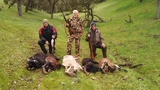 California Exotic Sheep Hunts.