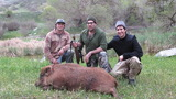Pig Hunting in California.
