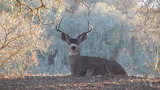 California Deer Hunting Outfitters.