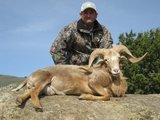 California Exotic Ram Hunts.