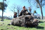 California Wild Boar Hunting.