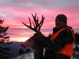 Montana Sunset Mule Deer Buck