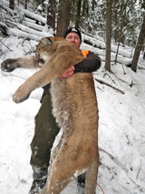 Arrowed This Beautiful Montana Lion