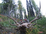 Monster Bull Elk Montana