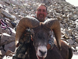 Bighorn Sheep Hunts in Colorado.
