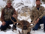 Mule Deer Hunting Colorado