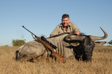 Bluewildebeest Hunting in South Africa.