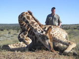 Giraffe Huntingin South Africa.