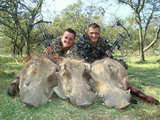 Bow Hunting Warthog in South Africa.