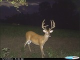 Kentucky Whitetail Deer Hunting Outfitters.