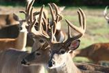 Deer hunting lodge Deer Haven  Acres