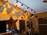Kansas Trophy Room at Petersburg Outfitters.