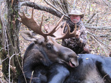 Moose Hunts Alberta Canada with Professional Moose Hunting Outfitters.