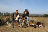 Texas Whitetail Deer & Exotic Combo Hunt.