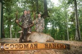 Elk Hunting Tennessee.
