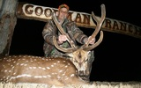 Axis deer hunting in Tennessee at Goodman Ranch.
