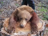 Free Chase Black Bear Hunts